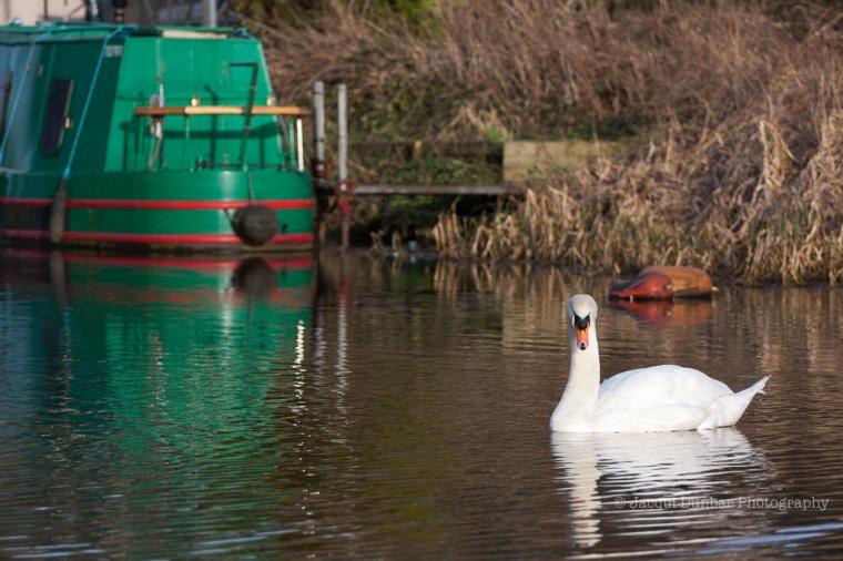 Canal walk 2 Feb 2013-12