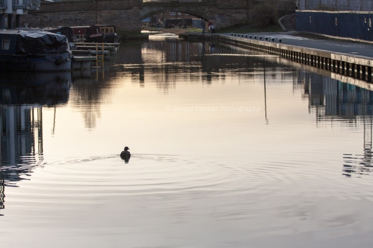 Canal walk 2 Feb 2013-20