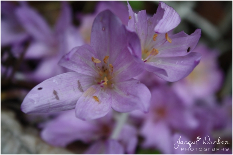 2014-04-20_028